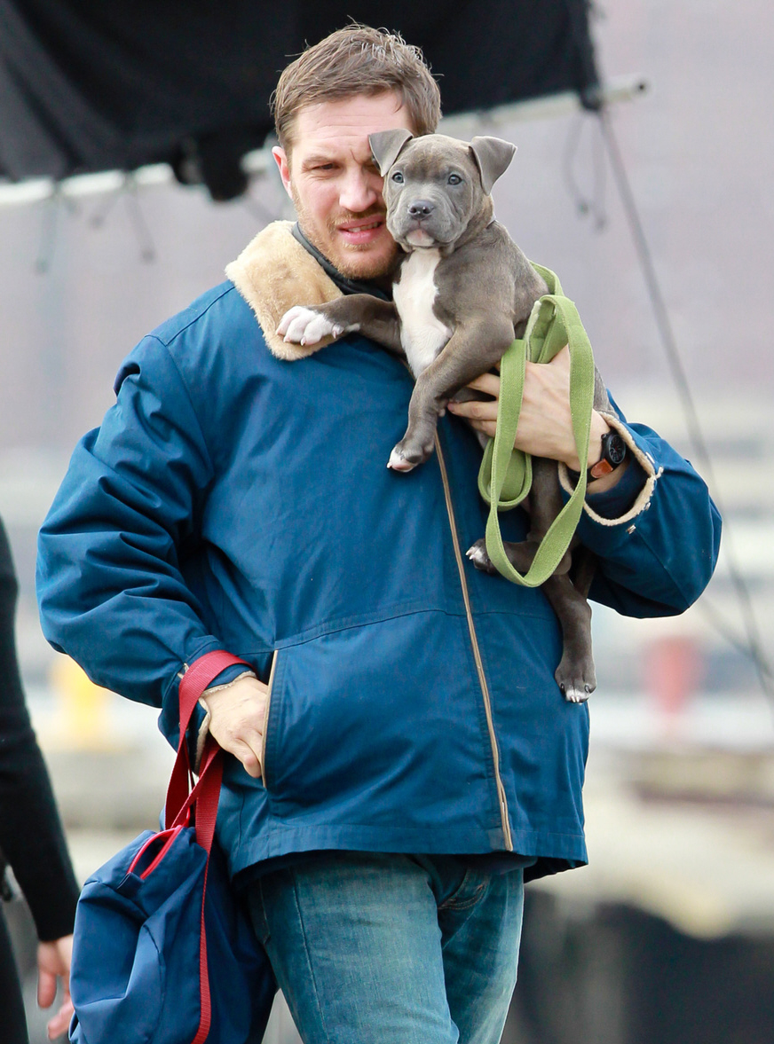Cele Bitchy Tom Hardy Holding A Pit Bull Puppy The Best