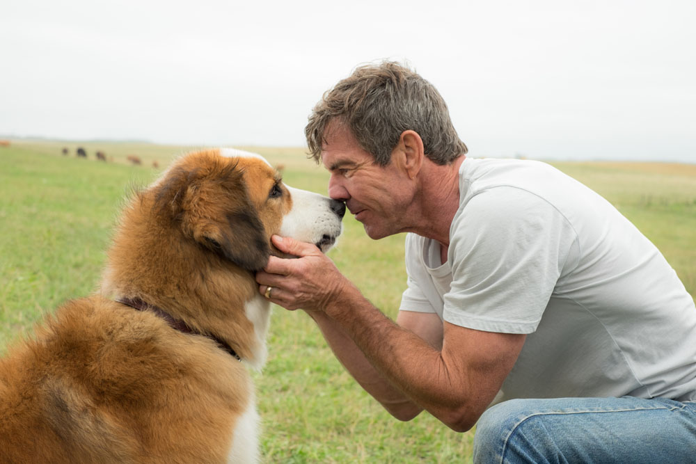 A DOG'S PURPOSE  bitchy | A Canine's Objective's producer defends the movie following animal abuse video dogspurpose1
