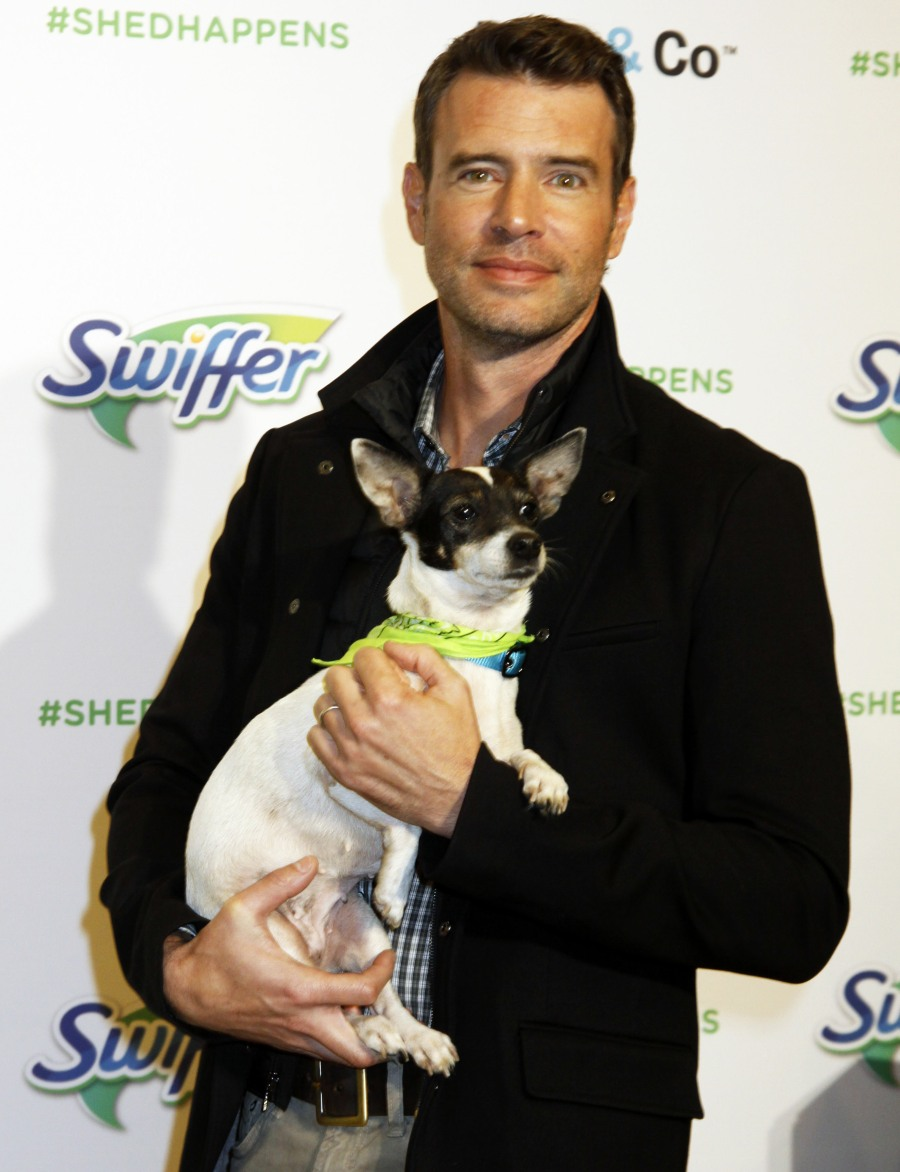 Scott Foley joins Holiday Pet Bark Box Adoption  bitchy | World gone mad: Scott Foley places peanut butter on his scrambled eggs wenn23153515